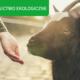Czym jest i na czym polega rolnictwo ekologiczne?
