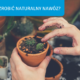 Nawozy naturalne do ogrodu – poznaj 3 sprawdzone przepisy