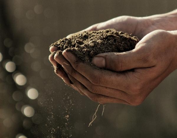 ziemia pod uprawę warzyw gleba pod warzywa nawożenie warzyw