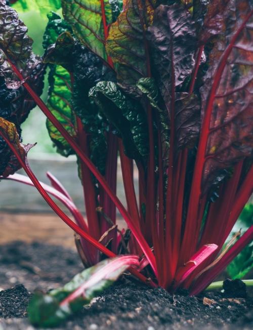 ziemia pod uprawę warzyw nawóz do warzyw
