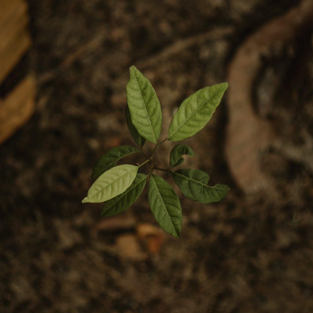 Humus glebowy-jak-zwiekszyc-ilosc-prochnicy-w-glebie