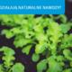 Jak działają naturalne nawozy do ogrodu? Poznaj 4 zasady
