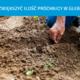 Skuteczny sposób na zwiększenie ilości próchnicy w glebie