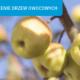 Sadzenie drzew owocowych na jesień – poradnik
