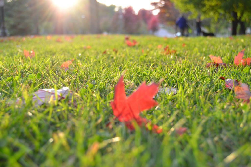 przygotowanie-trawnika-do-zimy-BactoTech