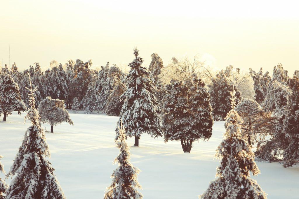 jak-dbac-o-drzewa-owocowe-zima