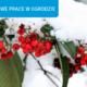 Zima w ogrodzie – jak dbać o działkę?