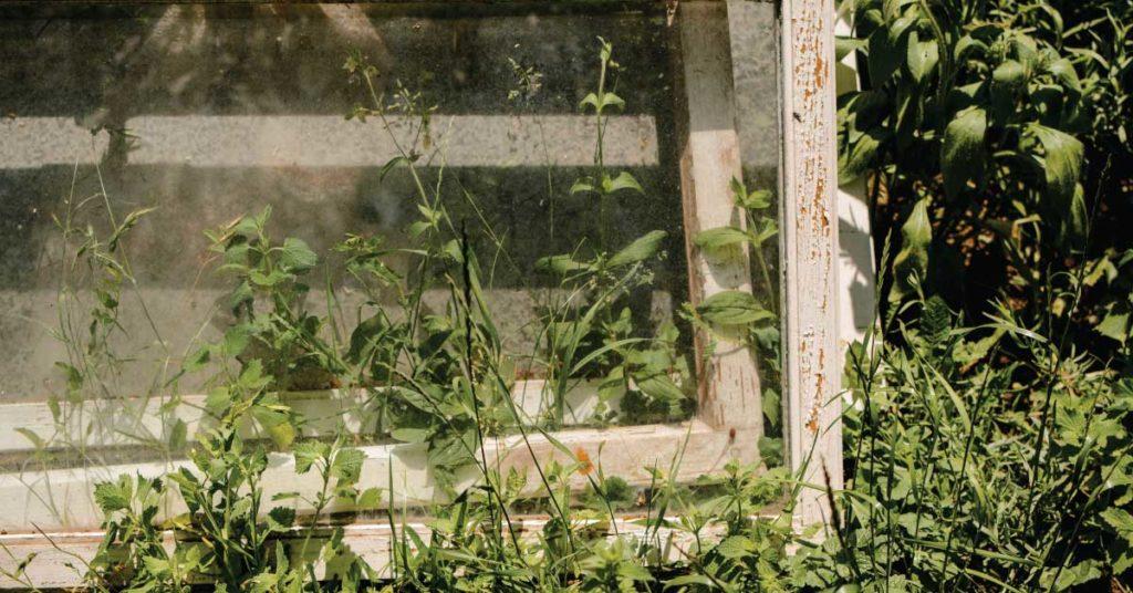 jaka-oslone-do-ogrodu-warzywnego-wybrac-inspekt