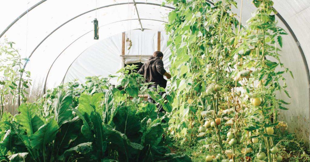 jaka-oslone-do-ogrodu-warzywnego-wybrac-szklarnia