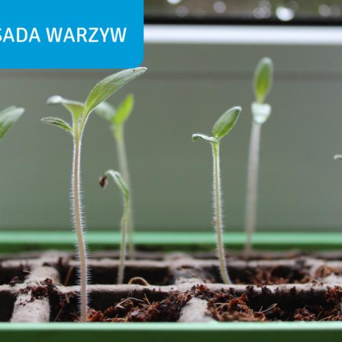 rozsada-warzyw-na-parapecie-BactoTech