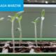 Rozsada warzyw na parapecie w lutym – jak zacząć?