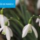 Marzec w ogrodzie – przygotuj działkę na wiosnę!