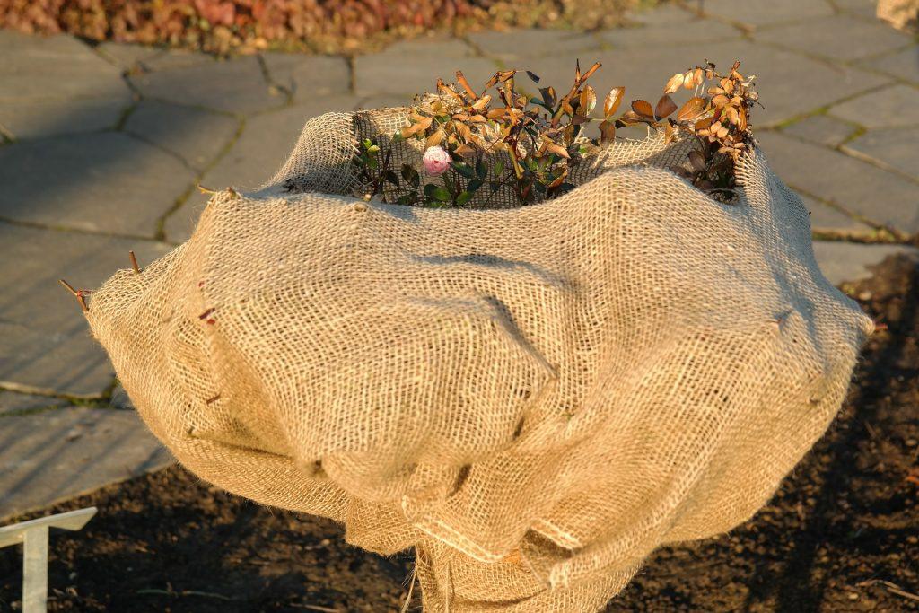 marzec-w-ogrodzie-przycinanie-krzewow-roz