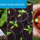 Terminy siewu warzyw: kiedy siać nasiona do gruntu i na rozsadę?
