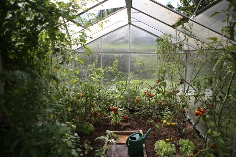 terminy-siewu-warzyw-kalendarz-upraw-kiedy-siac-warzywa